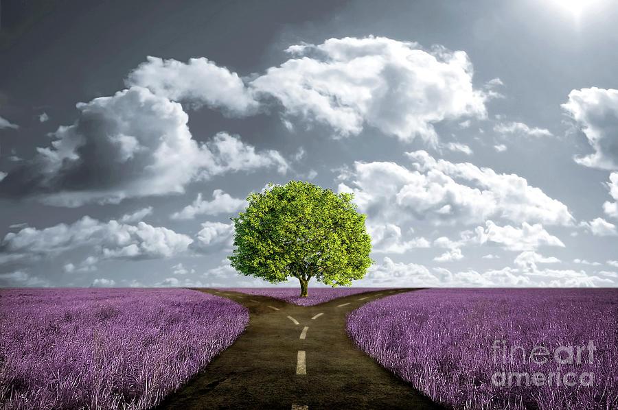 crossroad-in-lavender-meadow-giordano-aita