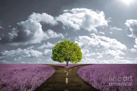 crossroad-in-lavender-meadow-giordano-aita