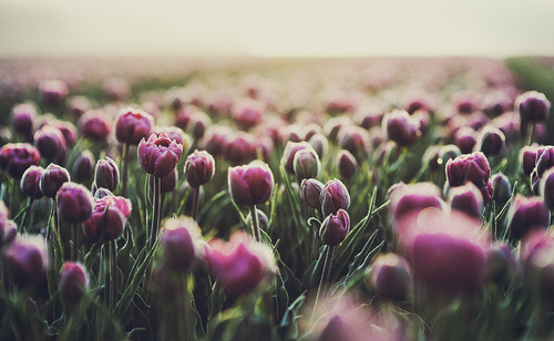 flower-nature-photography-pretty-purple-favim-com-115420