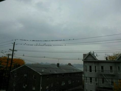 friday-fictioneers-grey-day-with-pigeons-roger-bultot-1